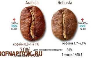 Арабика или робуста? Что выбрать настоящему кофеману