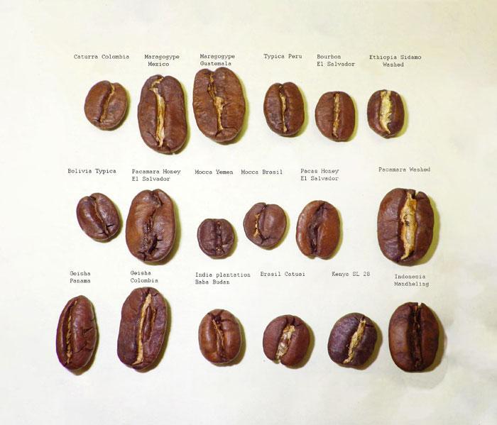 Какой сорт кофе самый крепкий